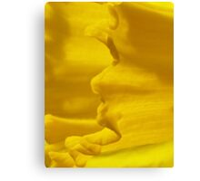 Daffodil close up Canvas Print