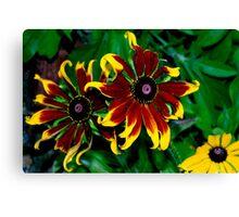 Special daisies Canvas Print