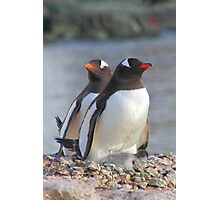Pair of Gentoo Penguins on the Nest with Chicks Photographic Print