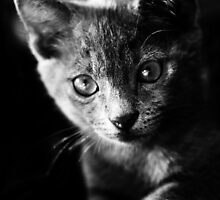 kitten I by morenina