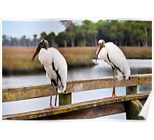 Wood Stork on a Pier Poster