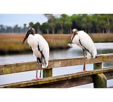Wood Stork on a Pier Photographic Print