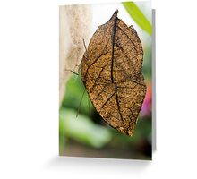 Dead Leaf Butterfly Greeting Card