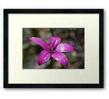Pink Enamel Orchid Framed Print