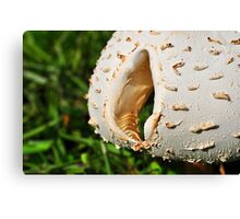 Mushroom Cap with Hole Canvas Print