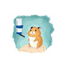Hamster life Photographic Print