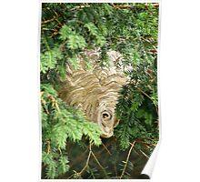 Hornets Nest Poster