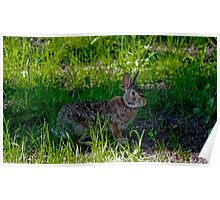 Peter Cottontail Poster