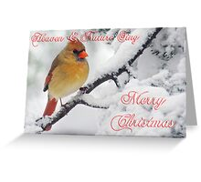 Female Cardinal Christmas Card Winter Scene Greeting Card