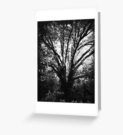 Rooted in Indifference Greeting Card