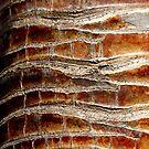 Bark 3 by JessicaMWinder