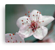 A Simple Blossom Metal Print