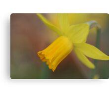 Soft Focus Daffodil Metal Print