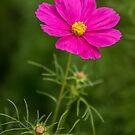 Wild Flower by Darren Freak
