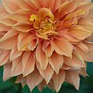 Big Bloom by Darren Freak
