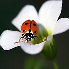 Beauty in my garden by WendyJC