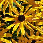 Cone flowers by AZLiane