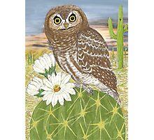 Elf Owl Photographic Print