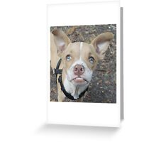 Ziggy Greeting Card