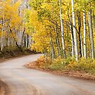 Autumn Road by Candy Gemmill
