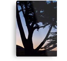 cypress tree near the Cambria coast at sunset Metal Print