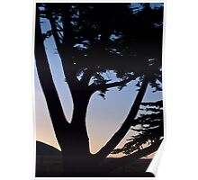cypress tree near the Cambria coast at sunset Poster