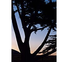 cypress tree near the Cambria coast at sunset Photographic Print