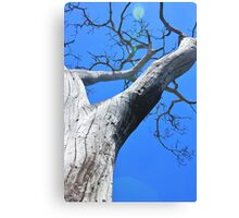Tree of Light - Nature Background of Age Canvas Print