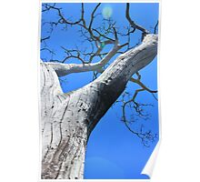 Tree of Light - Nature Background of Age Poster