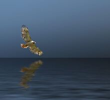 Hawk Soaring Over Water by Klinger