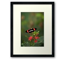 Above the Bouquet Framed Print