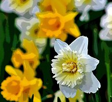 White and Yellow Daffodils in the Abstract by Gilda Axelrod