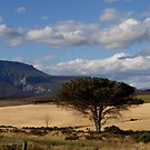 One tree valley.. in Africa by Karen01