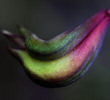 Triglochin procera by andrachne