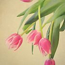 Tulips by Vintageskies