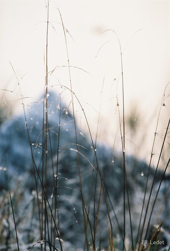 Ice Drops by Jill  Ledet