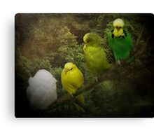 The Roost Canvas Print