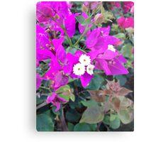 Vibrant Pink Bougainvillea Metal Print