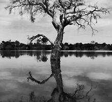 Dead Tree in Black & White by Haggiswonderdog