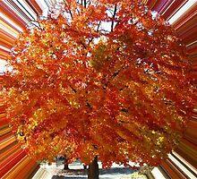 WeatherDon2.com Art 130 by dge357