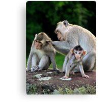 Monkeys of Angkor Wat - Cambodia. Canvas Print