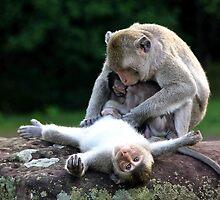 Monkeys of Angkor Wat II - Cambodia. by Tiffany Lenoir