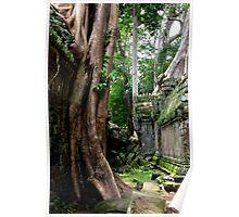 Ta Prohm Temple IV - Angkor, Cambodia. Poster