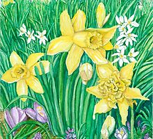 Daffodils by clotheslineart