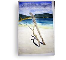 Drift wood in the sand at Little Oberon Bay Canvas Print