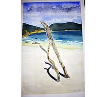 Drift wood in the sand at Little Oberon Bay Photographic Print