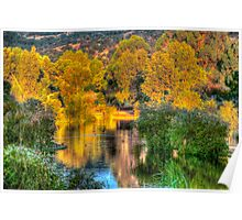 Trees around the lake Poster
