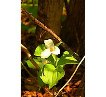 The woods is blooming ! Sign of Peace and Hope Photographic Print