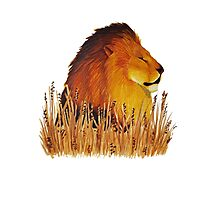 Lion in the grass Photographic Print
