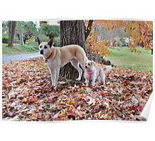 Gus and Gidget's  Autumn Holiday Poster